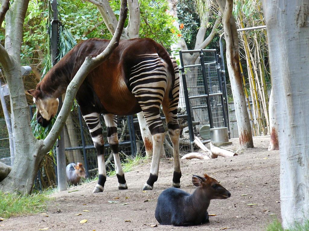 A zorse? | Half zebra, half horse? | Brett T | Flickr