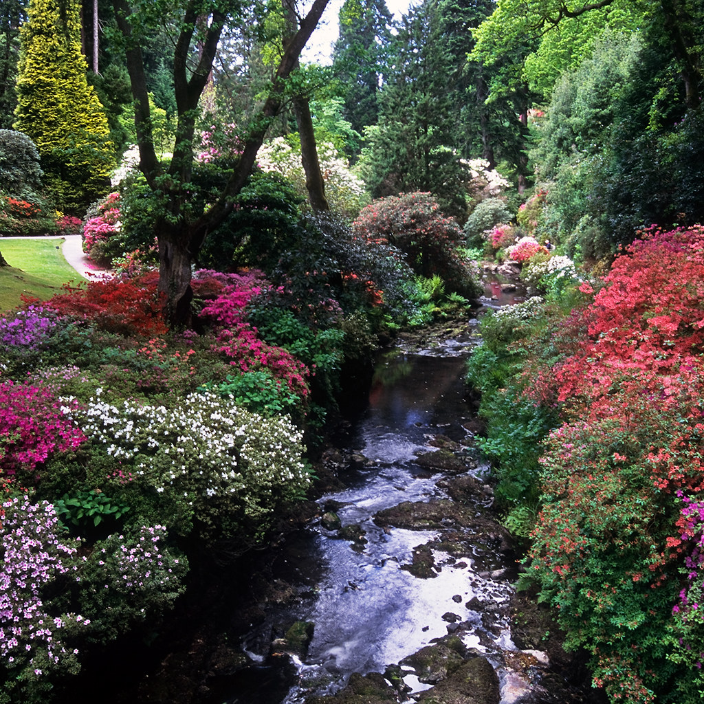 Bodnant Gardens, Conwy, Wales, UK | River banks covered in ...