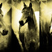 tintedhorses
