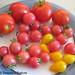 Fresh Pizza Margherita(ish): Tomatoes!