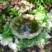 Little birdbath in shade garden