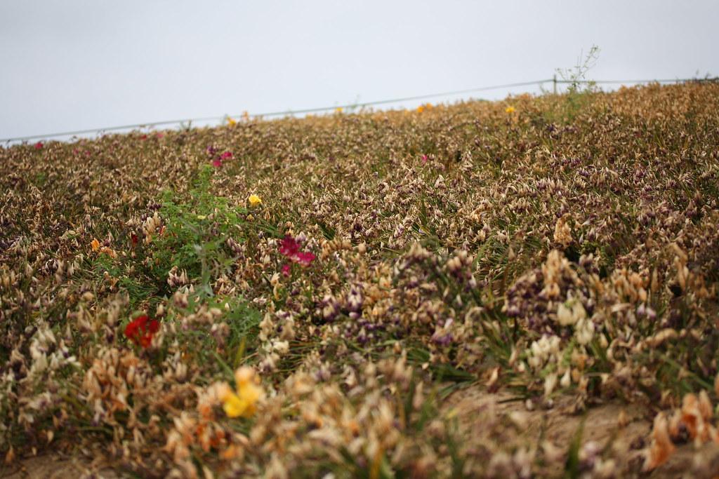 Dead Flower Field