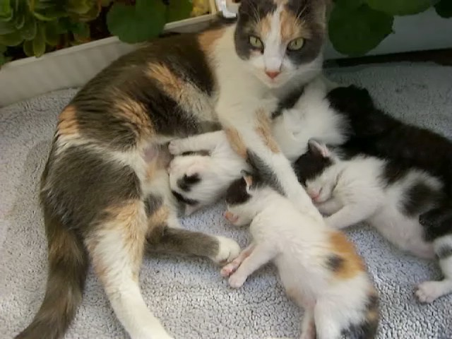 Cute Cat And Dog Photos