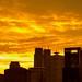 Tokyo golden sunset