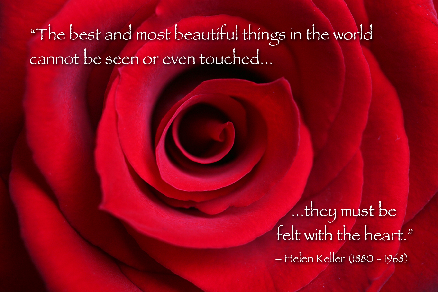 All Sizes Red Rose Macro With Helen Keller Quote Flickr Photo