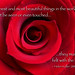 Red Rose macro with Helen Keller quote