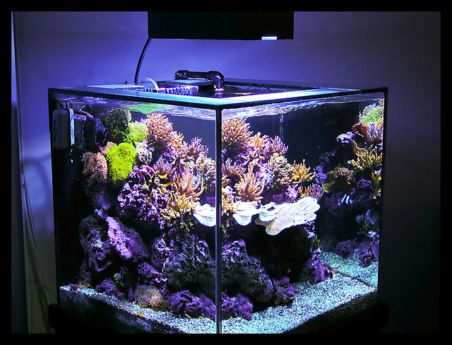60g cube reef tank joseph isip flickr for Cube saltwater fish tank
