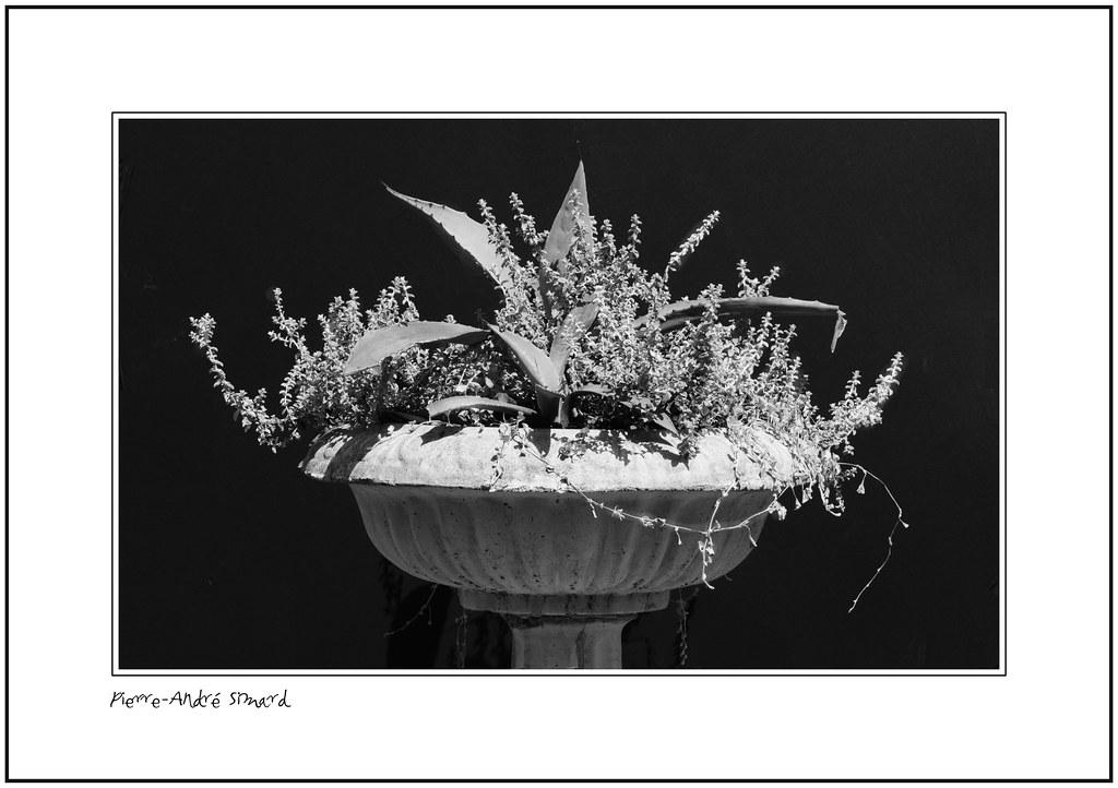Jardini re en ciment brut et gris y sont artistiqu flickr - Jardiniere en ciment ...