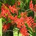 Flowers in Manzanita