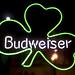 Shamrock Budweiser