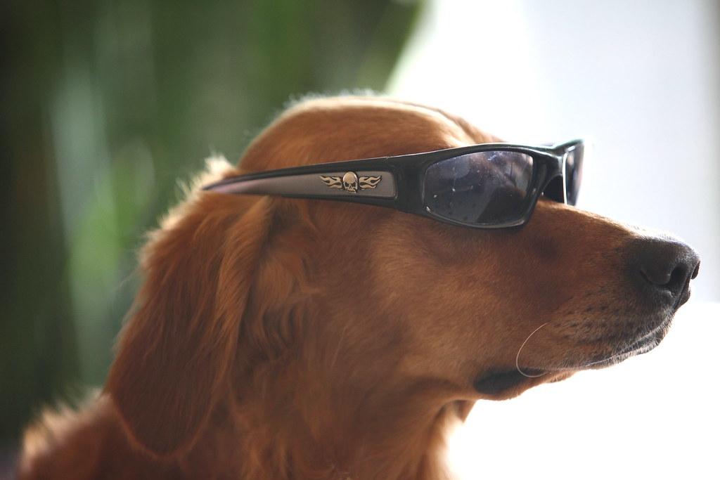 Red Dog Sunglasses