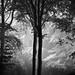 Misty Friston Forest