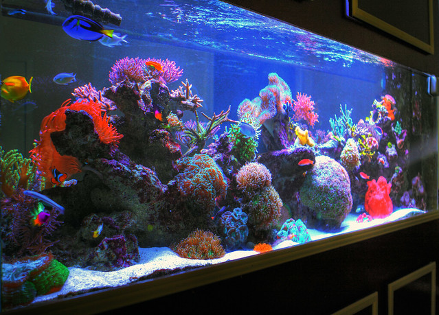 Hdr sherry 39 s 285 gallon saltwater aquarium right side for Aquarium angle