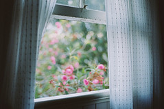 windows | by ashley oostdyck