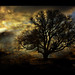 ~ again and again, my magic tree for you ;-)