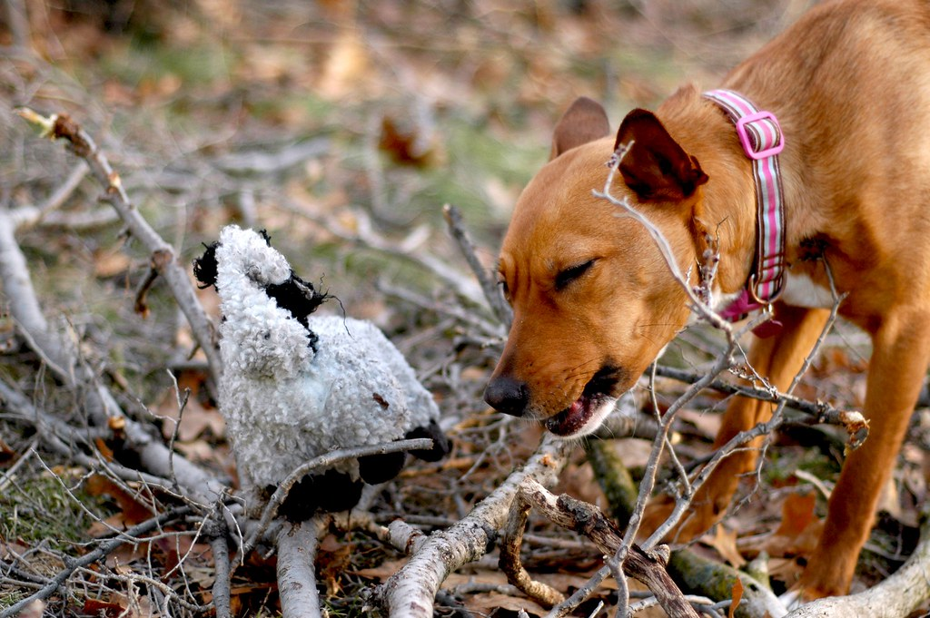 Chew Toys For Neurituc Dogs