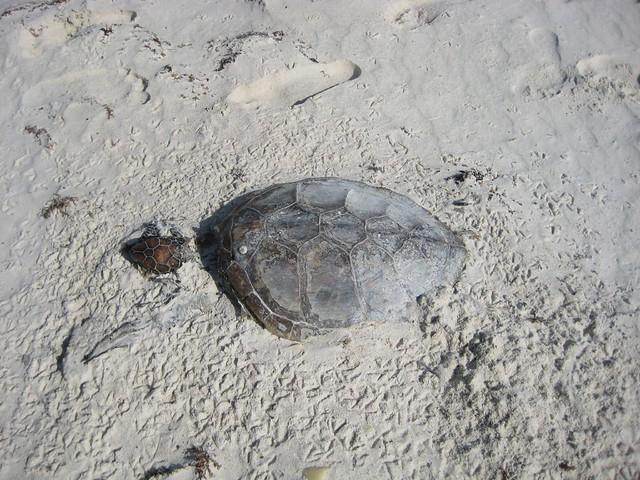 Turtle Beach Z Sound Kontrolle