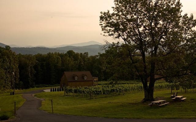 Naked Mountain Winery 66