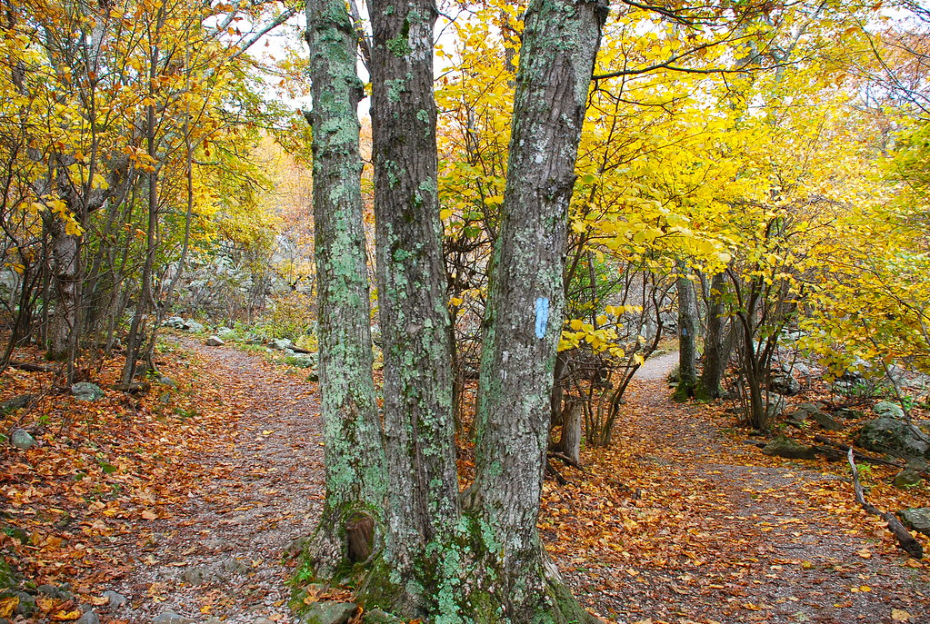 Two roads diverged in a yellow wood... | Stony Man Nature ...