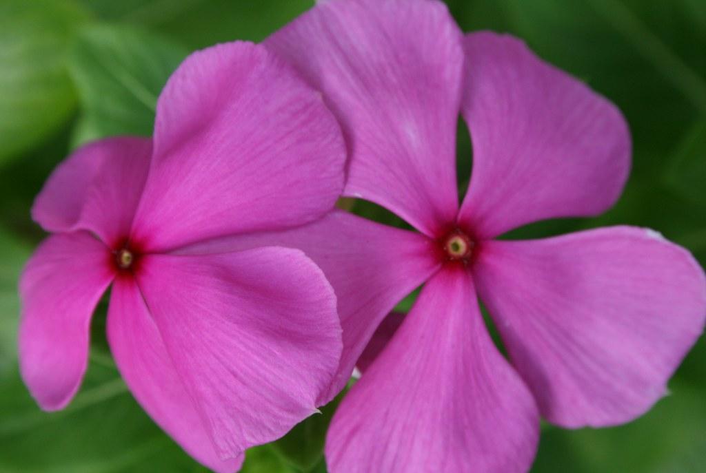 Boa Noite - Flor Resistente, Venenosa E Respeitada
