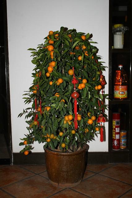 Naranjo t pico de a o nuevo flickr photo sharing - Arbol tipico de navidad ...