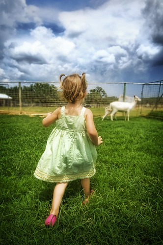 Isabella chases a baby goat | by Stuck in Customs