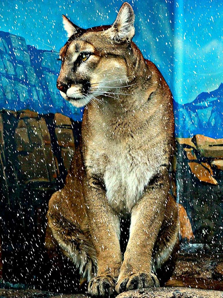 Beurette Salope De Mulhouse Pour Plan Cul Cougar En ALsace