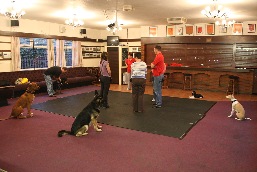 Image Result For Obedience Dog Training