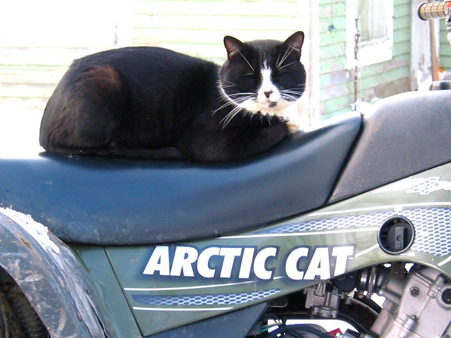 Arctic Cat F For Sale