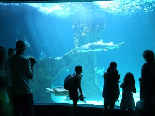 Zoo acuario madrid flickr photo sharing - Montadores de pladur en madrid ...