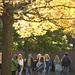 Philadelphia University students walking to class on a Fall day