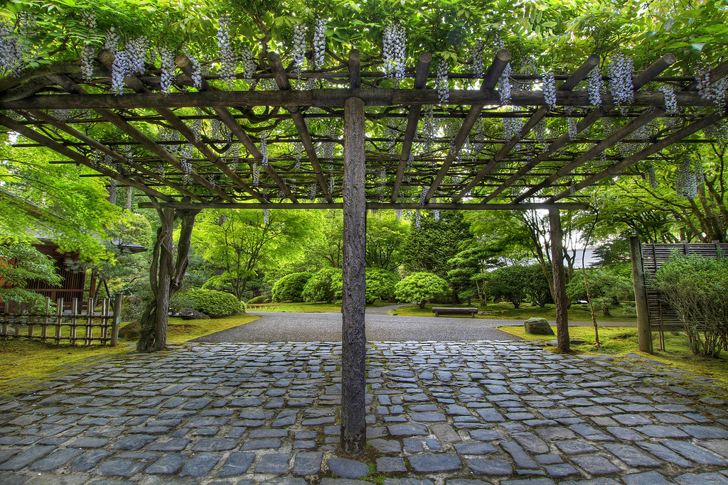 Wisteria blooming on pergola at portland japanese garden 2 - Portland japanese garden free day ...