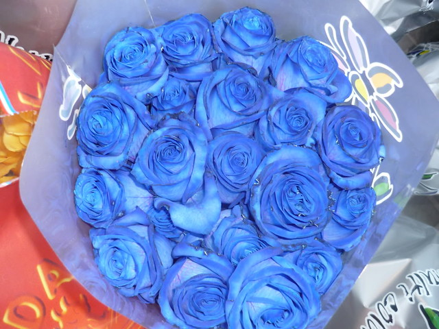 Hermosas Rosas Azules Mariel Flickr