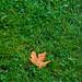 Leaf on Grass
