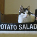 Potato salad cat 2