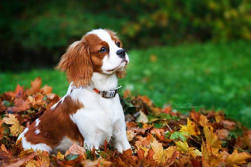 Willy found autumn! | by Kerli'sPhotography