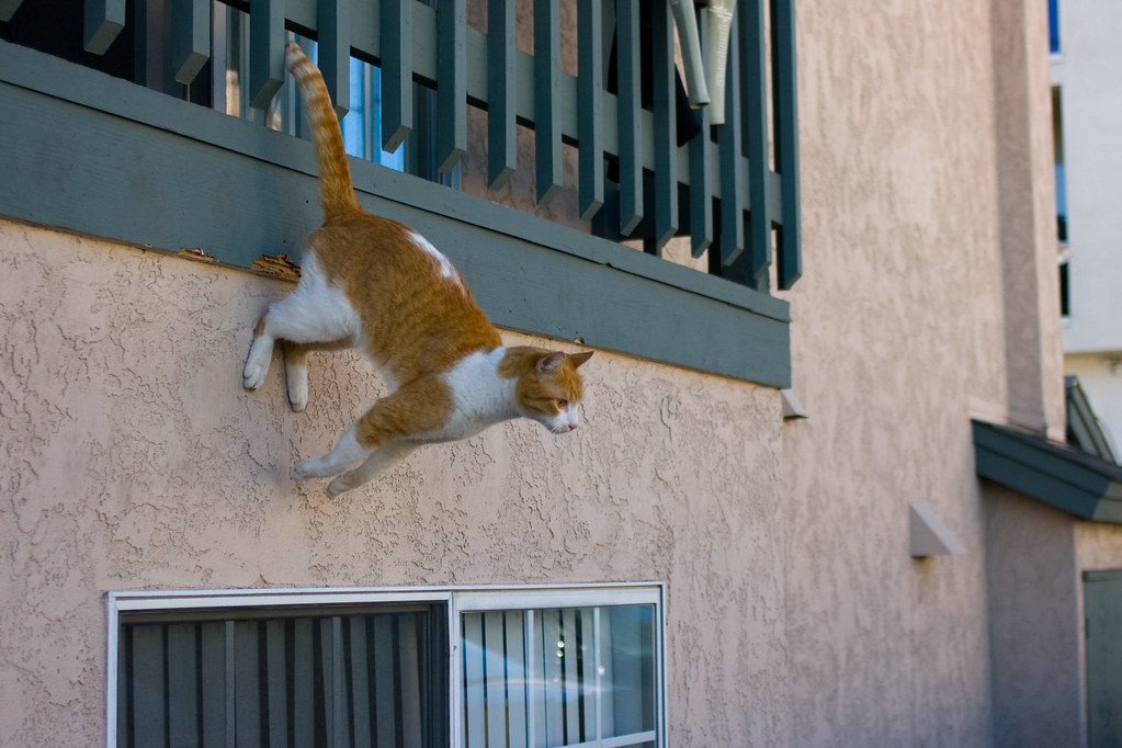 Spider Cat The Cat Prefers To Leave The House Via My