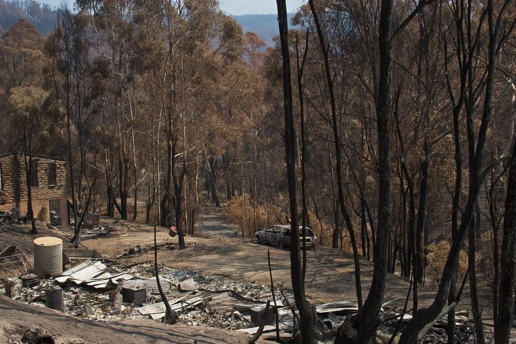 bush fire aftermath flowerdale victoria australia
