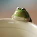 Frog Cup closeup