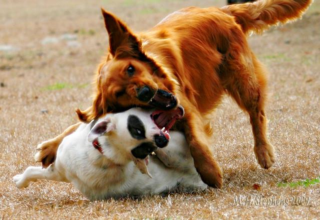 Extremely Tough Dog Toys