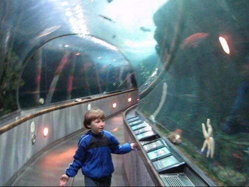 San Francisco Aquarium Of The Bay San Francisco Aquarium
