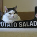 Potato salad cat 1