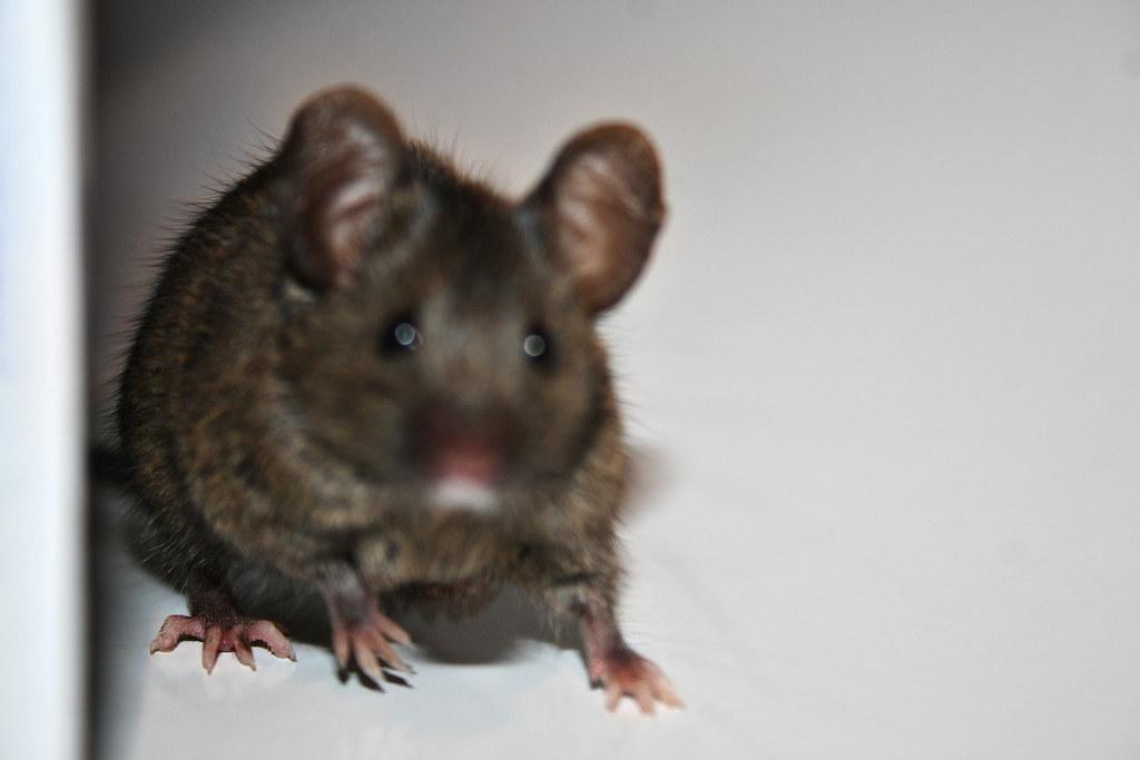 maus gefangen maus mouse manner migon kekse brunoquattro flickr. Black Bedroom Furniture Sets. Home Design Ideas