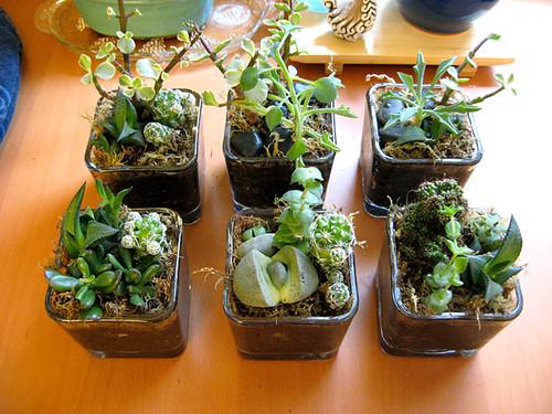 Mini succulent gardens i saw greenware design featured for How to make a mini garden