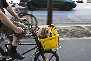 Shopping Basket Dog | by Mikael Colville-Andersen