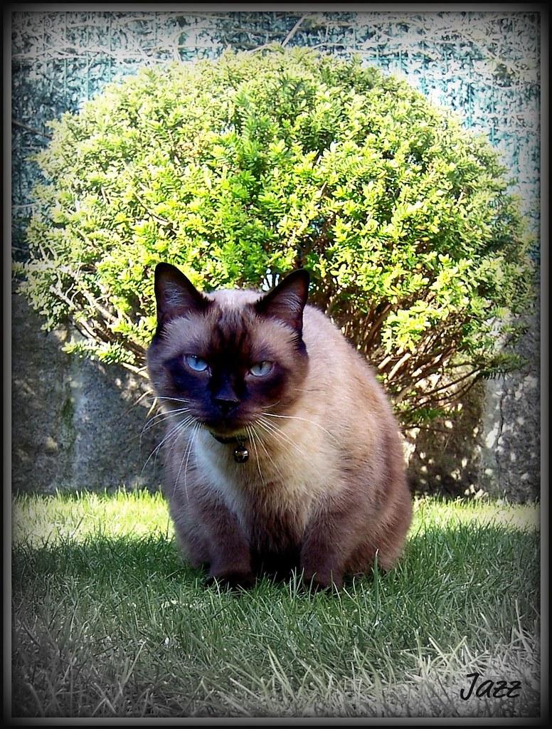 cat stevens wild world pdf