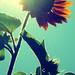 Flare flower