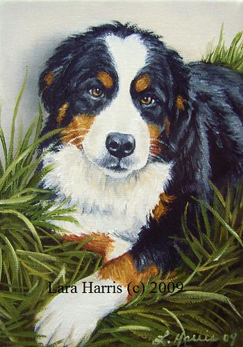 Painting 3 Bernese Mountain Dog Oil Painting By Lara Harr
