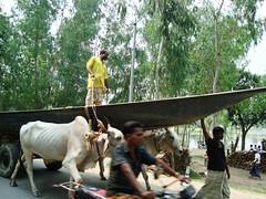 A Cow Cart with a Boat passes near Space Rally site