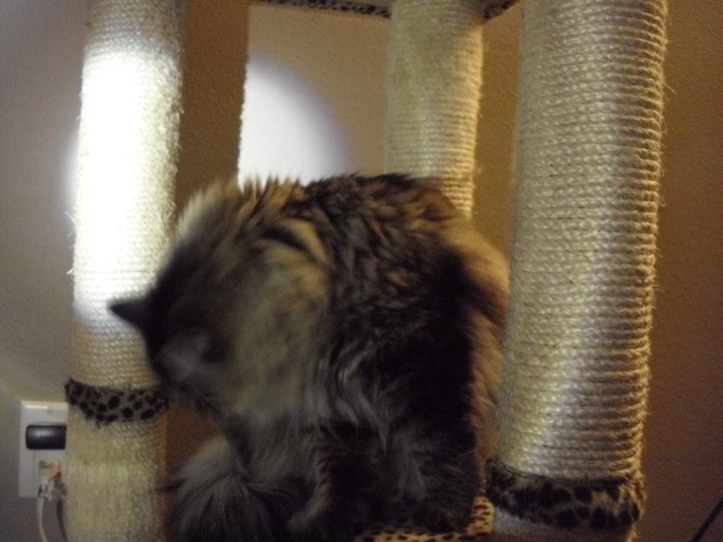 Strange Cat Tries To Rape Kitten